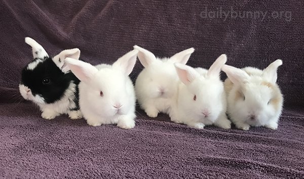 Baby Bunny Lineup!
