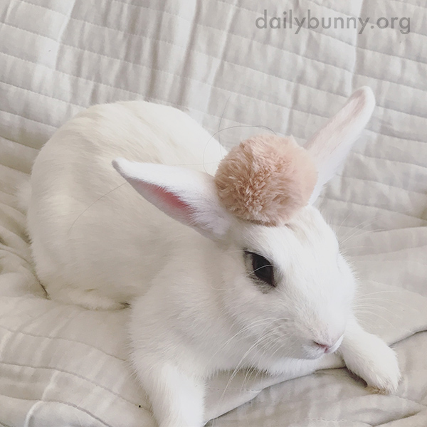 Bunny Looks So Stylish with That Pompom