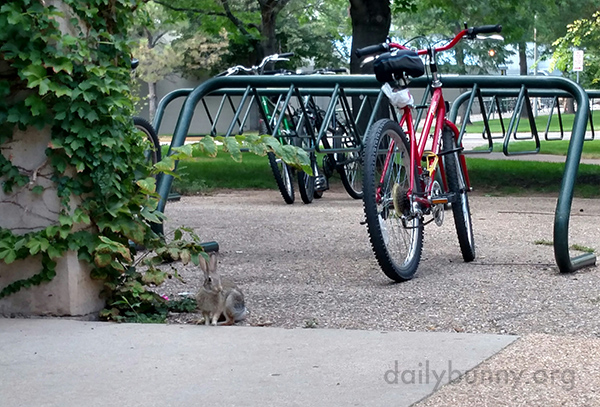 Maybe Wild Bunny Wants to Hitch a Ride