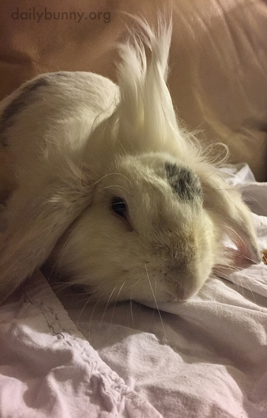 Punk Bunny Doesn't Need Hair Product for His Mohawk 1