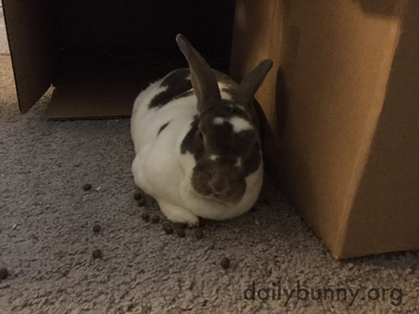 Bunny Doesn't Mind Napping Among His Mess