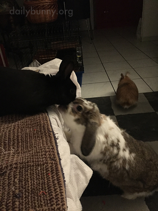 Bunny Stretches Up to Receive a Kiss