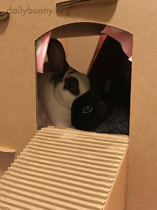 Bunnies Snuggle Up in Their Cardboard Castle 1