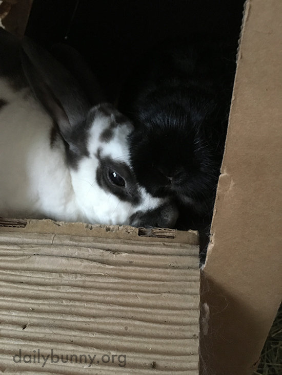 Bunnies Snuggle Up in Their Cardboard Castle 2