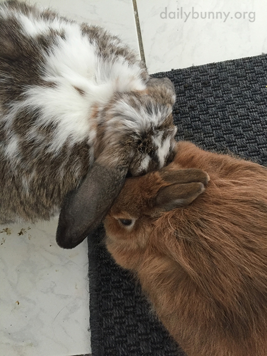 Bunny Needs a Serious Nuzzle