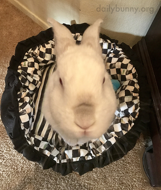 Bunny Will Accept Whatever It Is You Have for Him