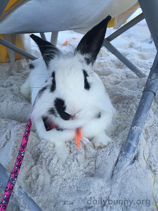Bunny Takes a Break from Exploring and Digging in the Sand 2