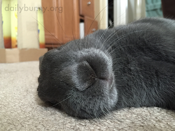 Flopped Bunny Is Fast Asleep