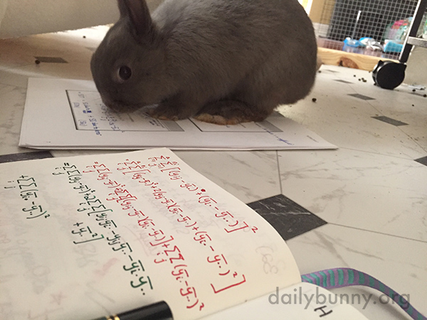 So You're Saying If I Solve These Equations for You, I'll Get Banana? Hmm, Let Me Take a Look. 1