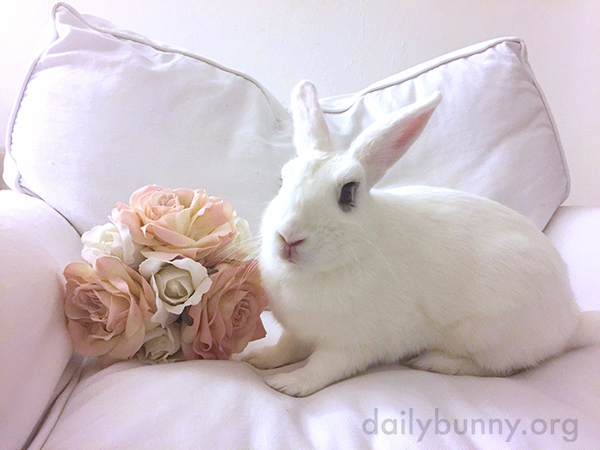 A Bunny Makes a Cozy Scene Cozier