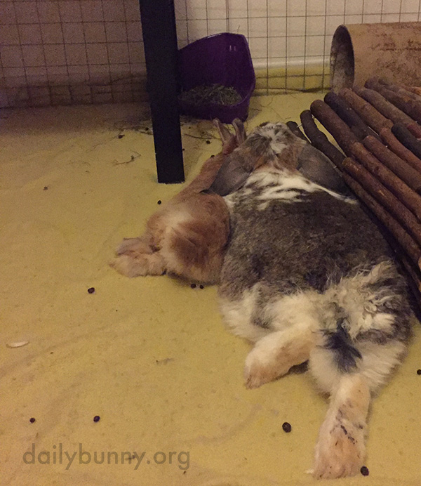 Bunnies of All Sizes Can Be Best Cuddle Buddies