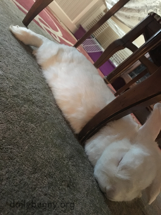 Bunny's Found a Good Napping Spot Against a Chair Leg