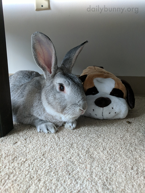 Bunny Cuddles with a New Stuffed Friend