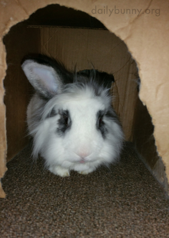 Bunny Lurks in His Box Shelter