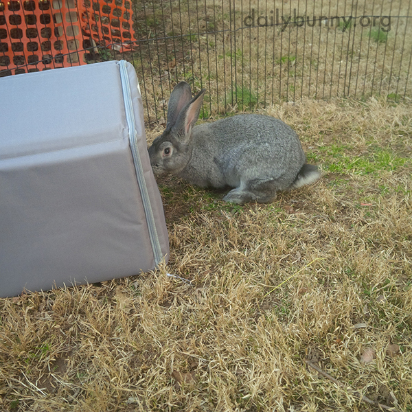Bunny Checks Out Her New Hideout 1