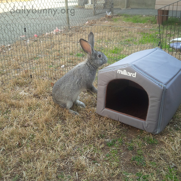 Bunny Checks Out Her New Hideout 2