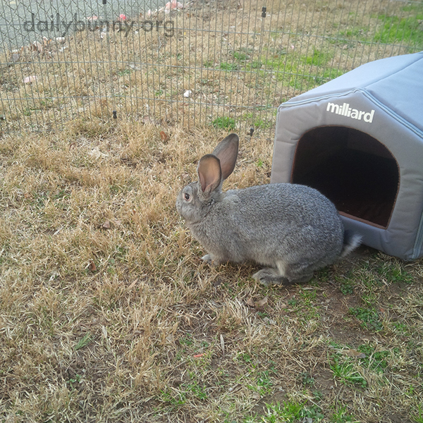 Bunny Checks Out Her New Hideout 3
