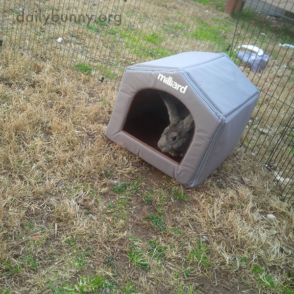Bunny Checks Out Her New Hideout 4