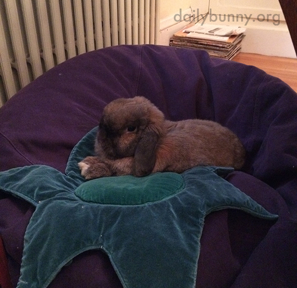 Bunny Gets Cozy on a Beanbag