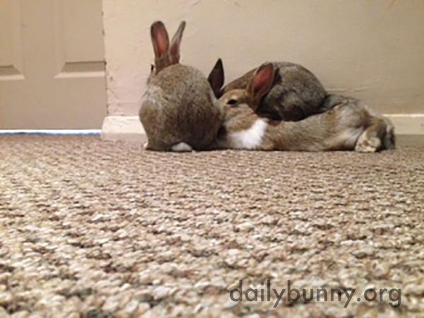 Bunnies Are Conspiring