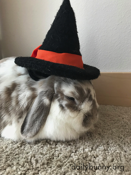 It's the Daily Bunny's Halloween 2017 Mega-Post! 1
