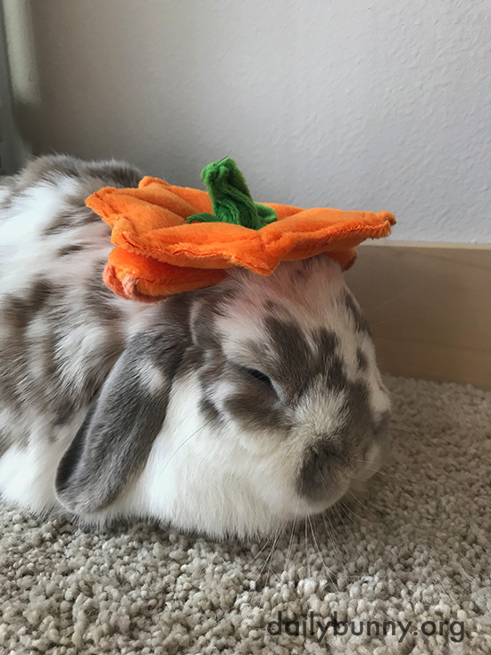 It's the Daily Bunny's Halloween 2017 Mega-Post! 2