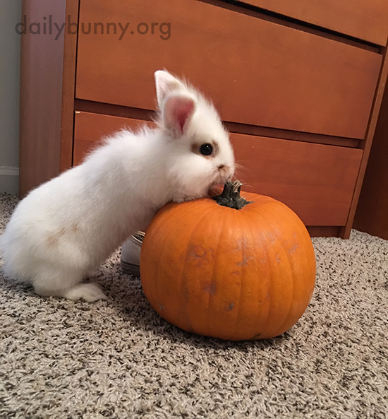 It's the Daily Bunny's Halloween 2017 Mega-Post! 3
