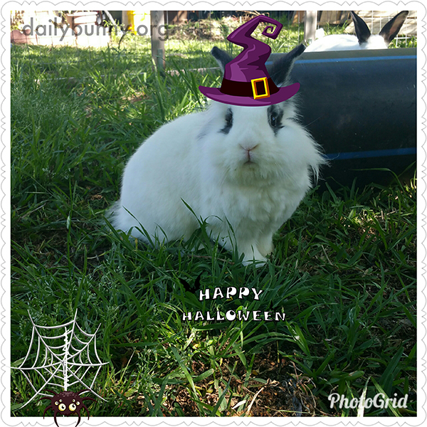 It's the Daily Bunny's Halloween 2017 Mega-Post! 5