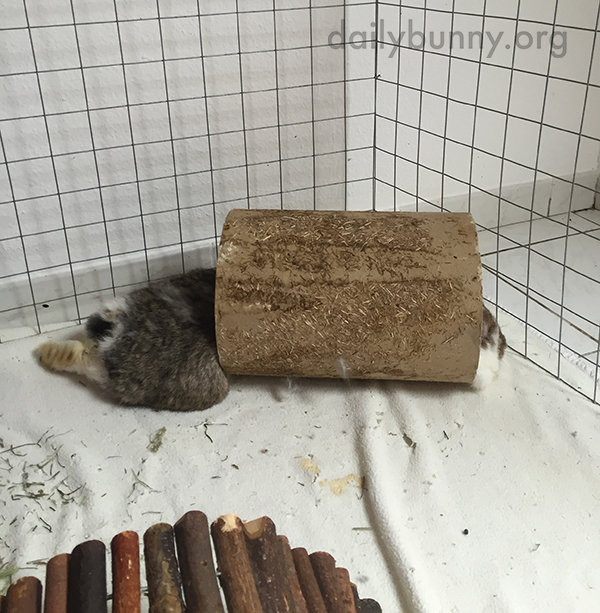 Melted Bunny Spills Out of His Tunnel