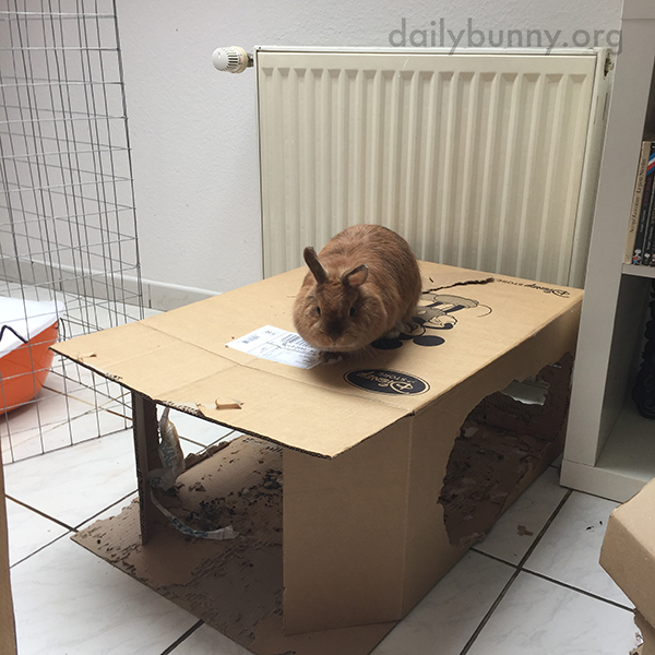 That Is Clearly Bunny's Box