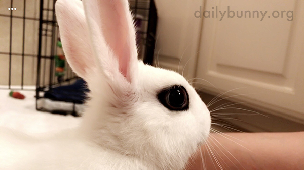 I Wish My Winged Liner Were as Perfect as Bunny's