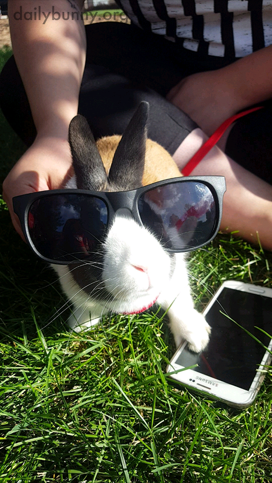 Bunny's Got His Sunglasses and Phone and Is Ready to Go
