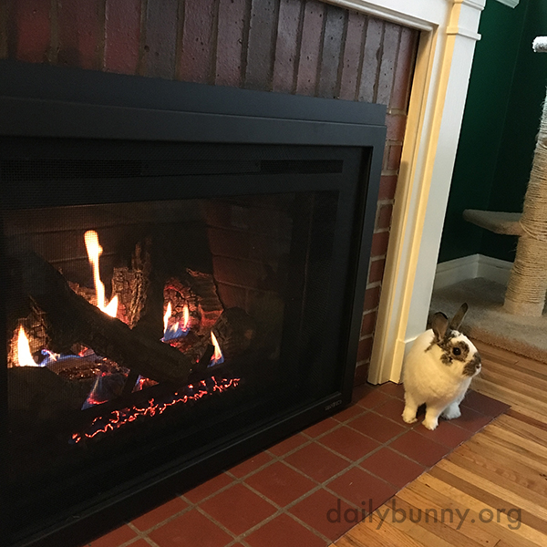 Bunny Warms Up in Front of the Fireplace