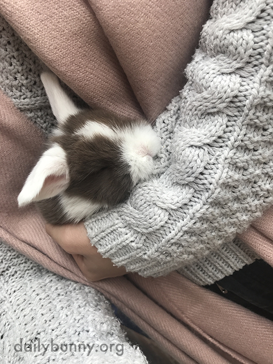 Tiny Bunny Apparently Feels Quite Cozy in Human's Arms