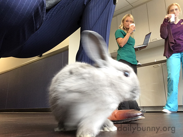 Therapy Bunny Makes Patients (and Staff) Happy 1