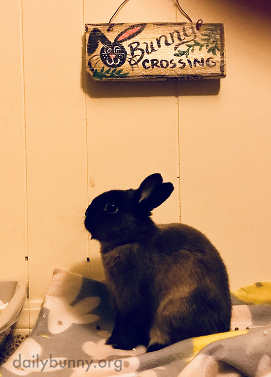 Bunny Nods Toward the Sign, Just as a Reminder of Who's Boss Around Here