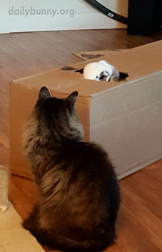 Kitty Patiently Waits Until Bunny Is Done with the Box