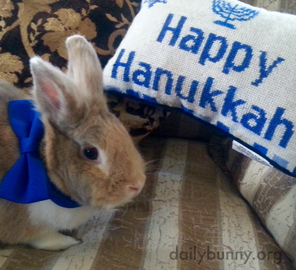 Bunny Can Hardly Wait for Sundown Tonight to Get the First of Many Treats