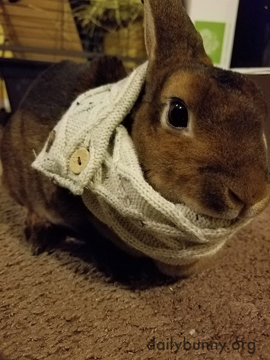 Bunny's Got That Knit Nibble-Ready