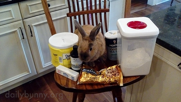 Kitchen Helper Bunny Makes Sure All the Baking Ingredients Are Accounted For