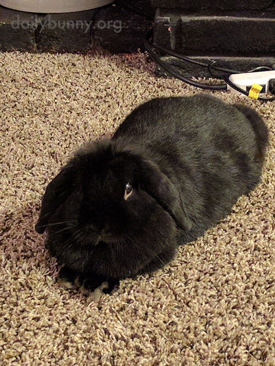 That Carpet Is Fluffier and Cozier Than the Snow Outside, Right, Bunny?