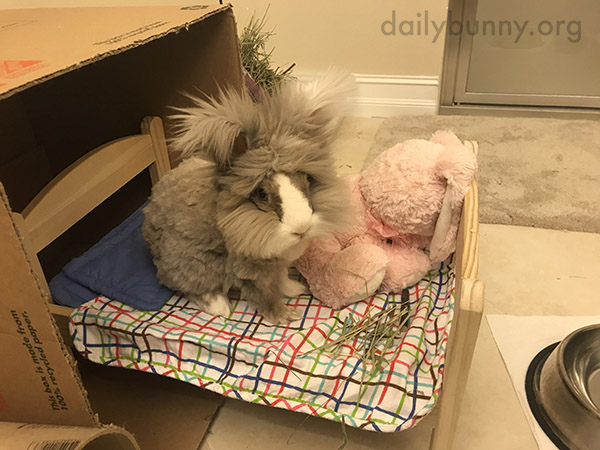 Lucky Bunny's Human Brings Her Breakfast in Bed