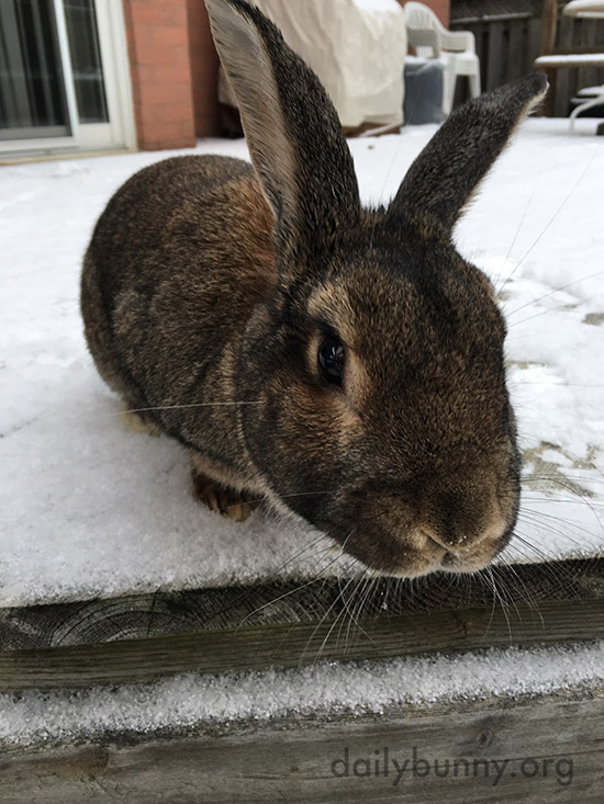 Bunny Seems More Interested in the Camera Than the Snow