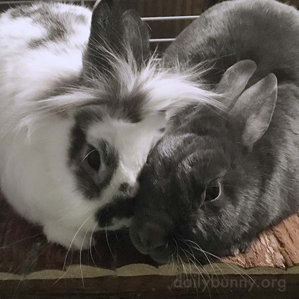 Bunnies Show Their Love with Nuzzles