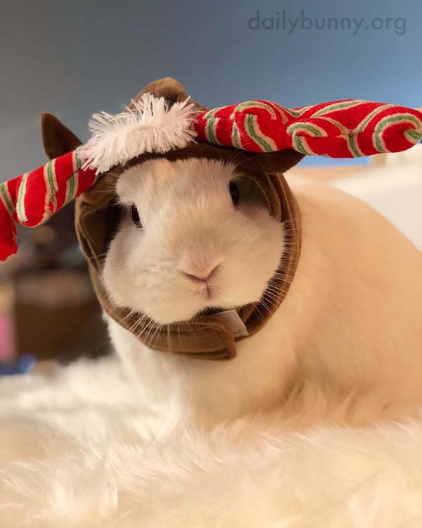 It's the Daily Bunny's Christmas 2017 Mega-Post! 1