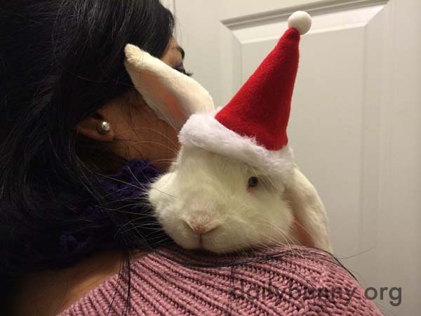 It's the Daily Bunny's Christmas 2017 Mega-Post! 4