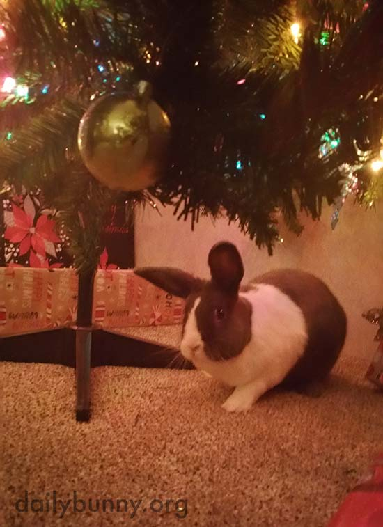 It's the Daily Bunny's Christmas 2017 Mega-Post! 8