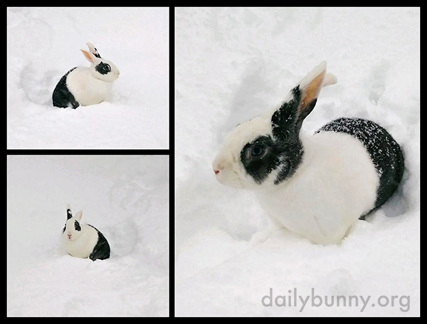 Bunny's Out for Some Digging in the Snow 2