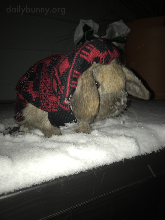 Bunny Tries Out the Snow for the First Time 1