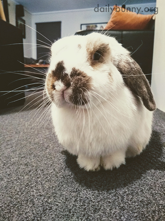 Bunny Has Such Long Whiskers!